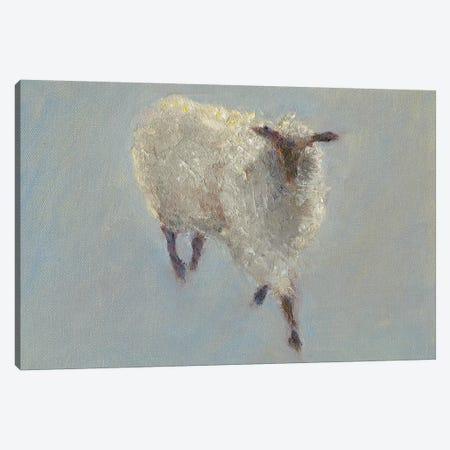 Sheep Strut II Canvas Print #WEN13} by Marilyn Wendling Canvas Art