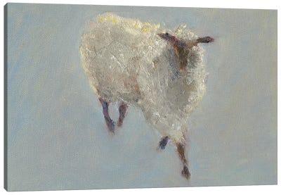 Sheep Strut II Canvas Art Print
