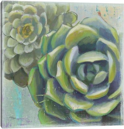 Succulents II Canvas Art Print