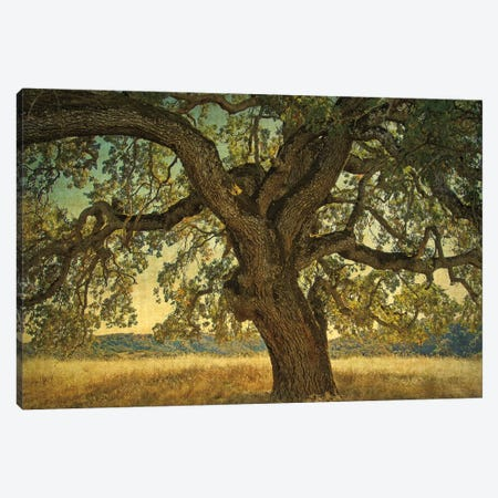 Blue Oak Silhouette Canvas Print #WGU1} by William Guion Canvas Art