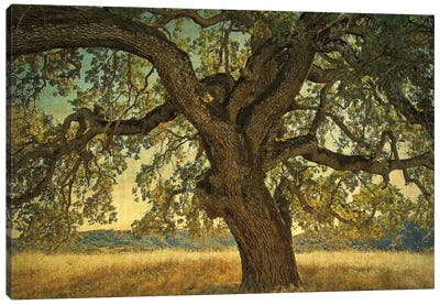 Blue Oak Silhouette Canvas Art Print