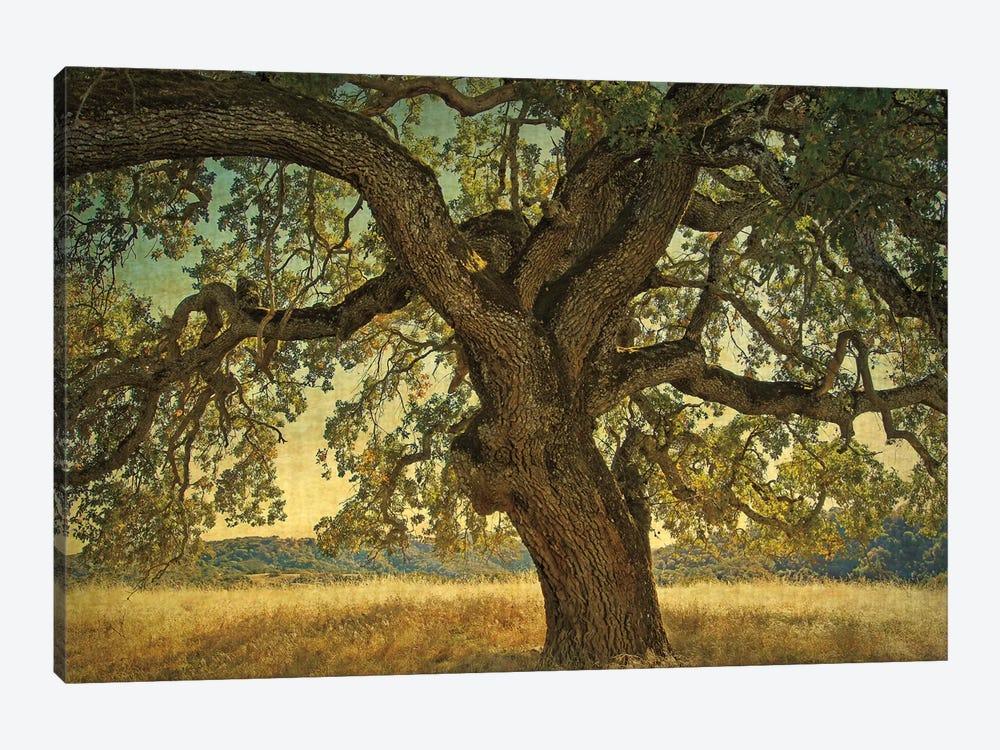 Blue Oak Silhouette by William Guion 1-piece Canvas Wall Art