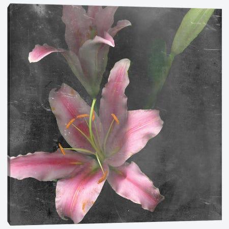 Fleur de Lys I Canvas Print #WIG123} by Alicia Ludwig Art Print