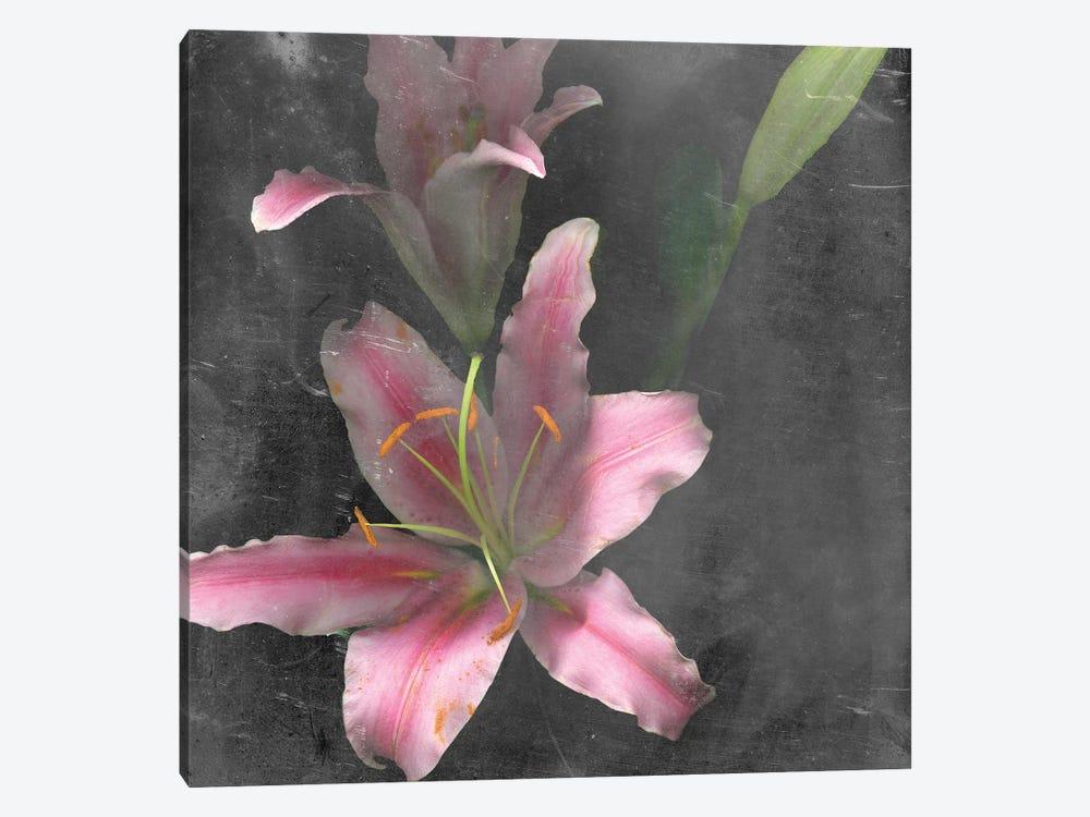 Fleur de Lys I by Alicia Ludwig 1-piece Canvas Art Print