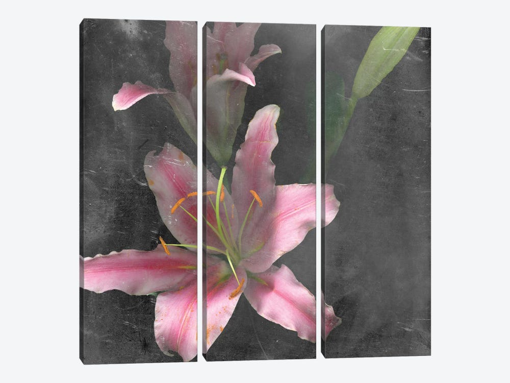 Fleur de Lys I by Alicia Ludwig 3-piece Canvas Print