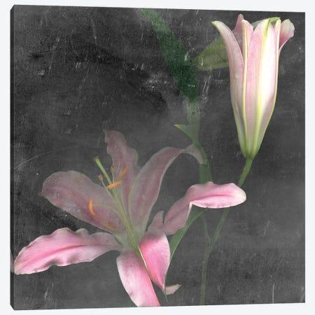 Fleur de Lys II Canvas Print #WIG124} by Alicia Ludwig Canvas Art