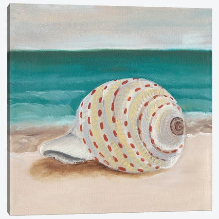 She Sells Seashells II Canvas Print #WIG126} by Alicia Ludwig Canvas Wall Art