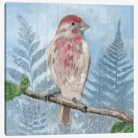 Eastern Songbird I Canvas Print #WIG127} by Alicia Ludwig Canvas Art
