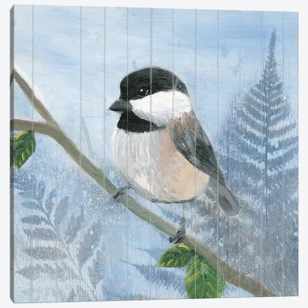 Eastern Songbird II Canvas Print #WIG128} by Alicia Ludwig Canvas Print