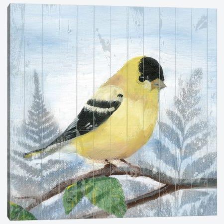 Eastern Songbird III Canvas Print #WIG129} by Alicia Ludwig Canvas Print