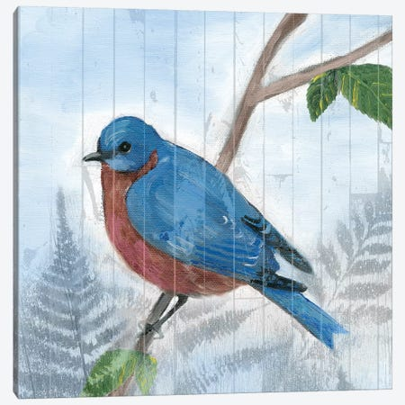 Eastern Songbird IV Canvas Print #WIG130} by Alicia Ludwig Canvas Artwork