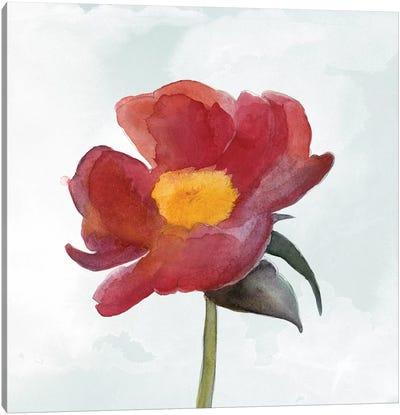 Joyful Peony I Canvas Art Print