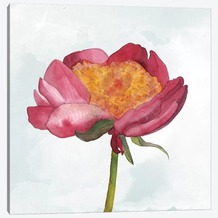 Joyful Peony II Canvas Print #WIG146} by Alicia Ludwig Canvas Art