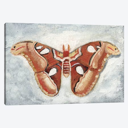Papillon de Nuit I Canvas Print #WIG151} by Alicia Ludwig Canvas Artwork