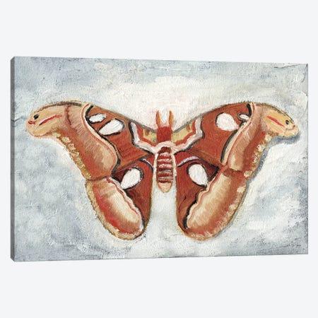 Papillon de Nuit I Canvas Print #WIG151} by Alicia Ludwig Canvas Artwork