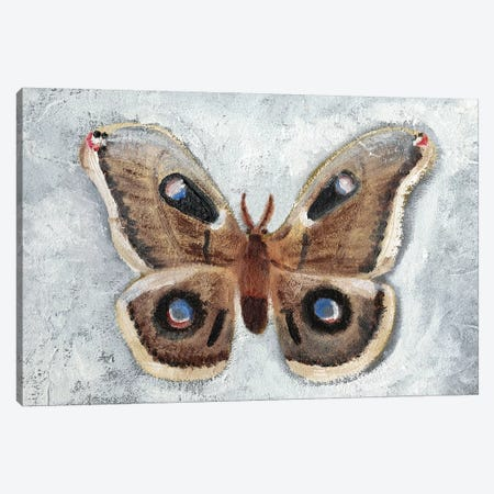Papillon de Nuit II Canvas Print #WIG152} by Alicia Ludwig Canvas Wall Art