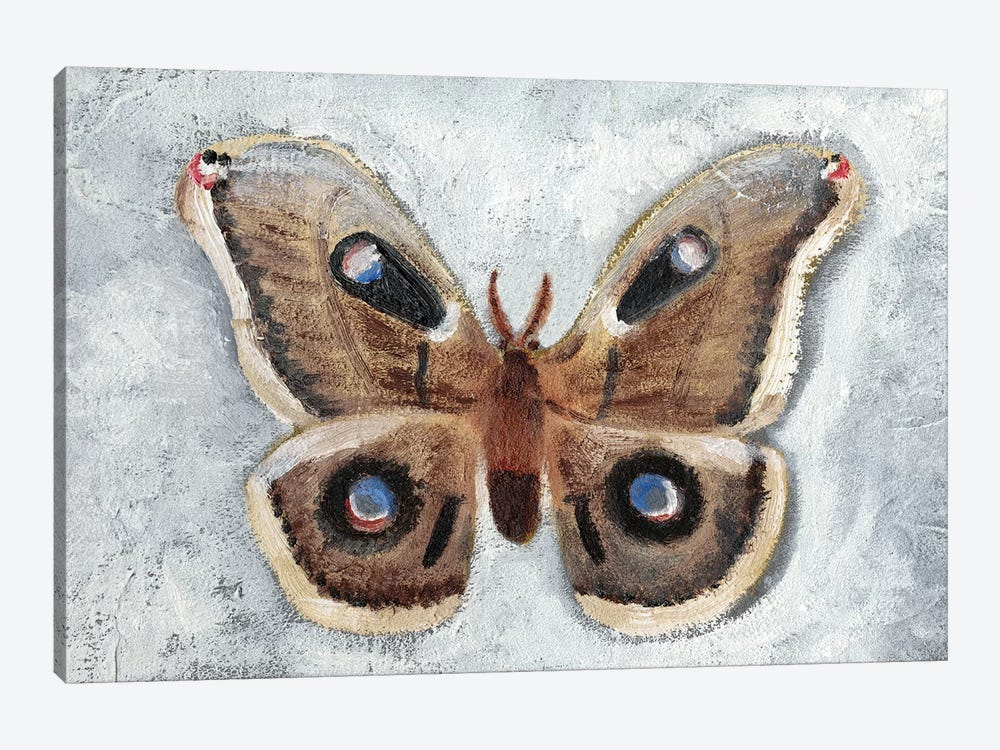 Papillon de Nuit II by Alicia Ludwig 1-piece Canvas Art Print
