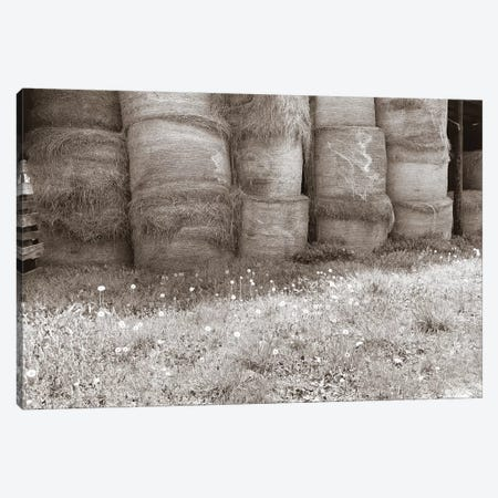 Sepia Farm Study V Canvas Print #WIG76} by Alicia Ludwig Canvas Artwork