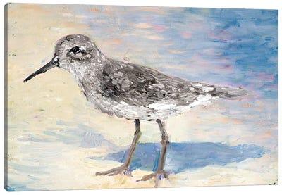 Sandpiper II Canvas Art Print