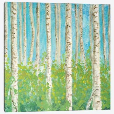 VIbrant Birchwood Square Canvas Print #WJO12} by Walt Johnson Art Print