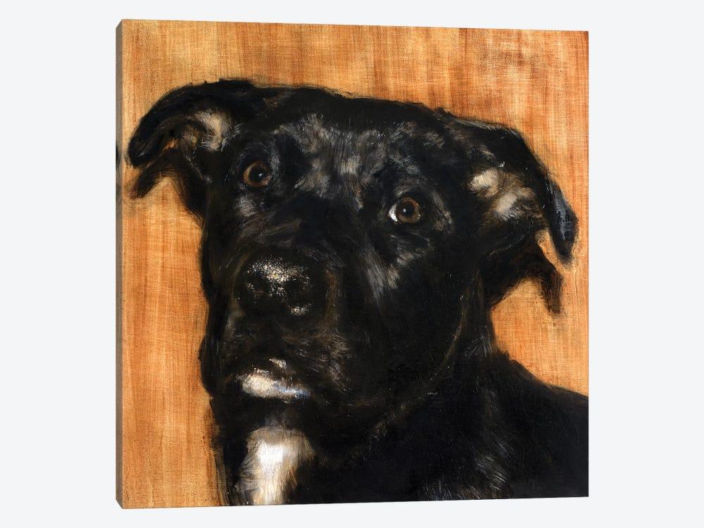 Puppy Dog Eyes I by Walt Johnson 1-piece Art Print