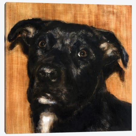 Puppy Dog Eyes I Canvas Print #WJO7} by Walt Johnson Canvas Art Print
