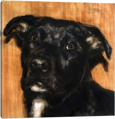 Puppy Dog Eyes I Canvas Art Print