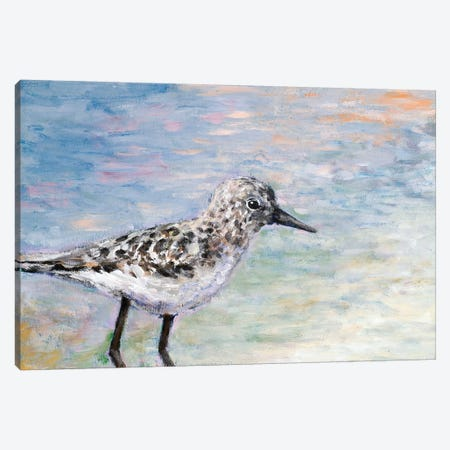 Sandpiper I Canvas Print #WJO9} by Walt Johnson Canvas Wall Art