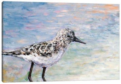 Sandpiper I Canvas Art Print