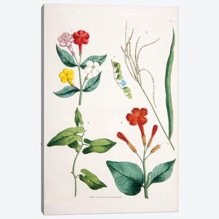 Plate VI Canvas Print #WJT4} by William Jowett Titford Canvas Art Print