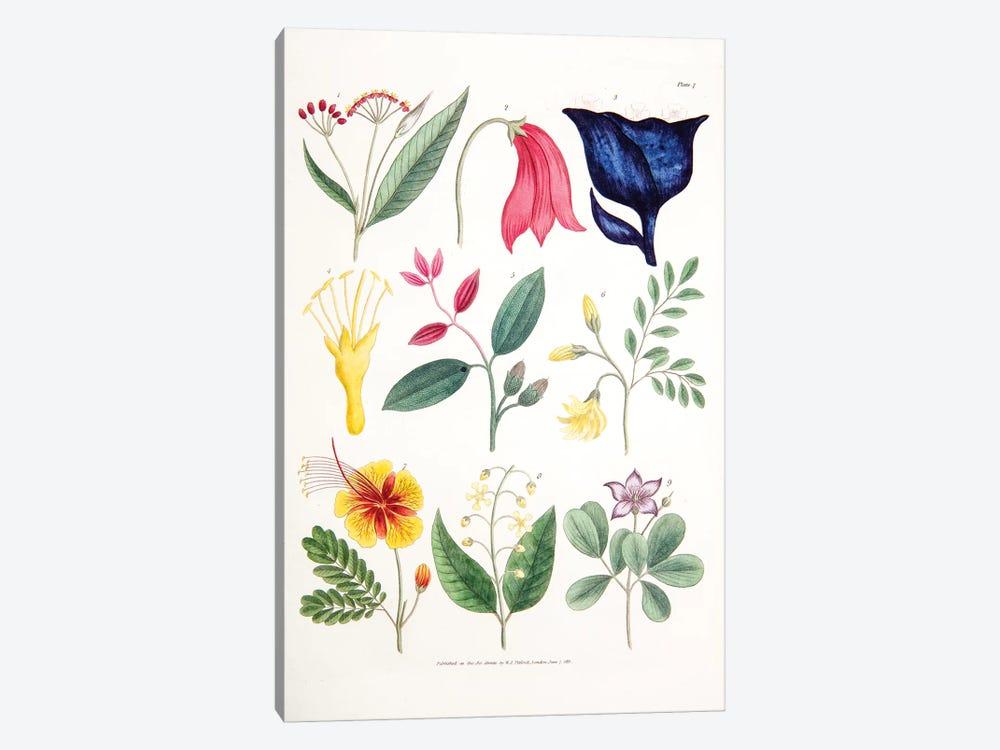 Plate VII by William Jowett Titford 1-piece Canvas Artwork