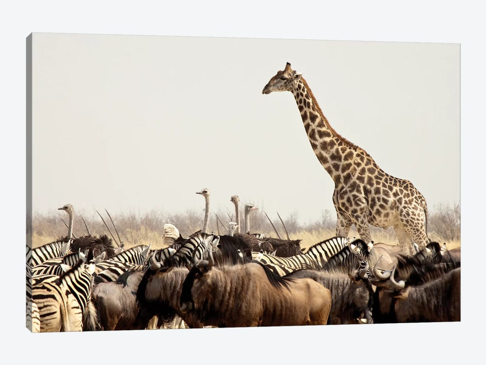 Wildlife, Etosha National Park, Namibia by Wendy Kaveney 1-piece Canvas Artwork