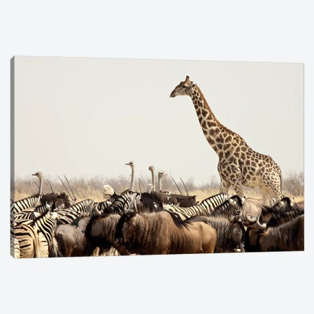 Wildlife, Etosha National Park, Namibia Canvas Print #WKA1} by Wendy Kaveney Art Print