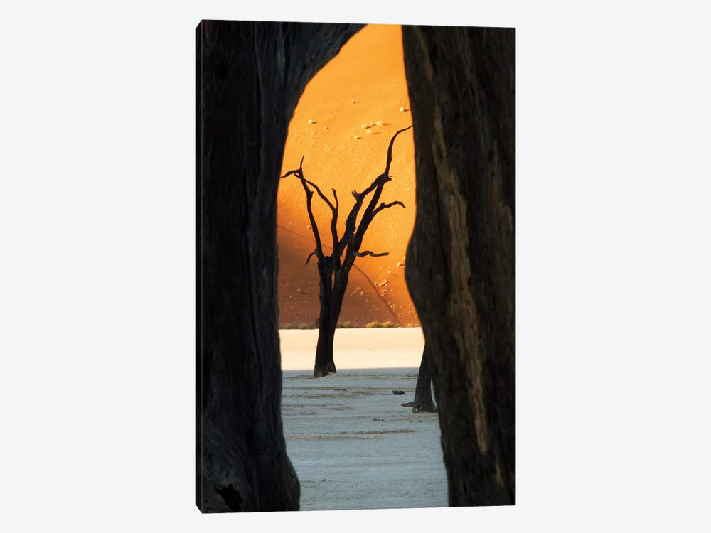 Dead Acacia Trees, Deadvlei, Namib Desert, Namib-Naukluft Park, Namibia by Wendy Kaveney 1-piece Canvas Art Print