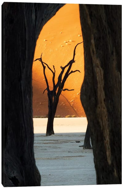 Dead Acacia Trees, Deadvlei, Namib Desert, Namib-Naukluft Park, Namibia Canvas Art Print