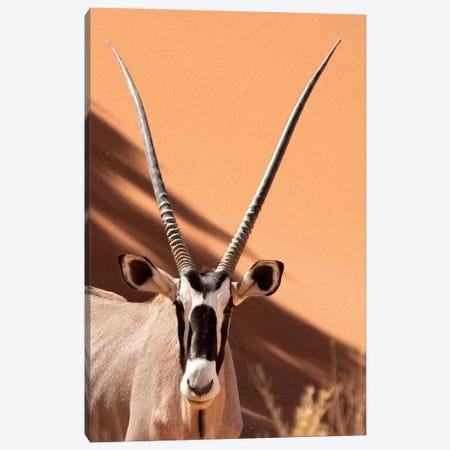 Oryx, Sossusvlei, Namib Desert, Namib-Naukluft Park, Namibia Canvas Print #WKA3} by Wendy Kaveney Canvas Print