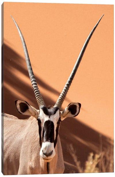 Oryx, Sossusvlei, Namib Desert, Namib-Naukluft Park, Namibia Canvas Art Print