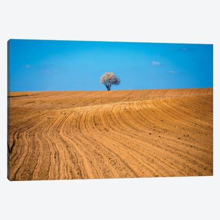 Field In Roztocze Canvas Print #WKB24} by Wiktor Baron Art Print