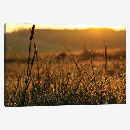 Meadow In Gorce Canvas Print #WKB58} by Wiktor Baron Canvas Print