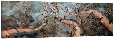 Birch Forest III Canvas Art Print