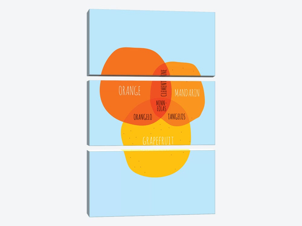 Oranges by Stephen Wildish 3-piece Canvas Artwork