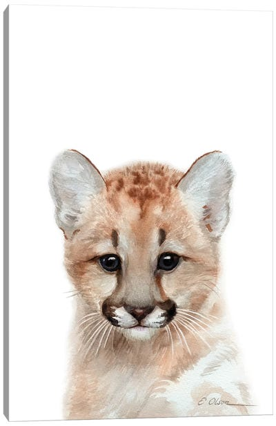 Baby Mountain Lion Canvas Art Print