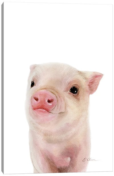Baby Pig Canvas Art Print