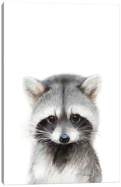 Baby Raccoon Canvas Art Print
