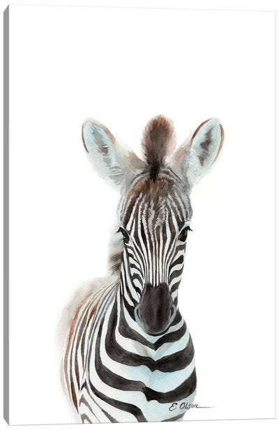 Baby Zebra Canvas Art Print
