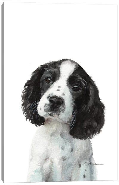 English Springer Spaniel Puppy Canvas Art Print