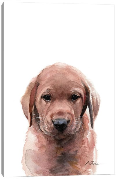Fox Red Labrador Puppy Canvas Art Print