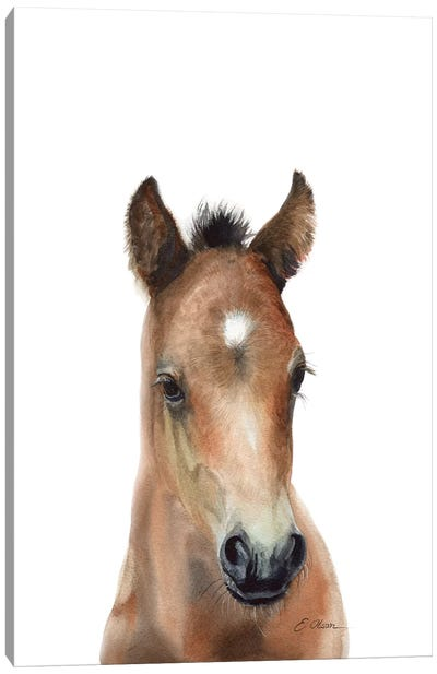 Bay Arabian Foal Canvas Art Print