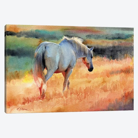 White Horse In Golden Fields Canvas Print #WLU120} by Watercolor Luv Art Print