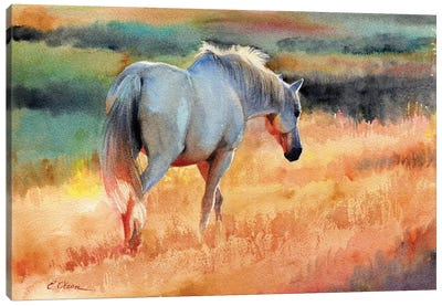 White Horse In Golden Fields Canvas Art Print